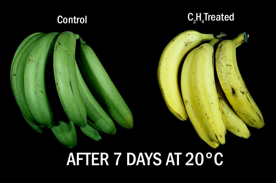 ¡Qué química hay entre mis frutas!