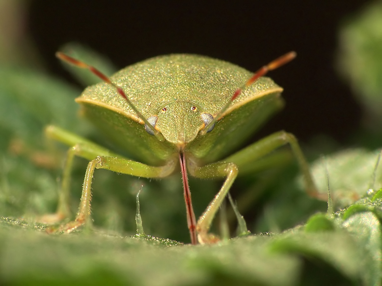 Resistiré (Cómo los insectos quieren seguir viviendo)