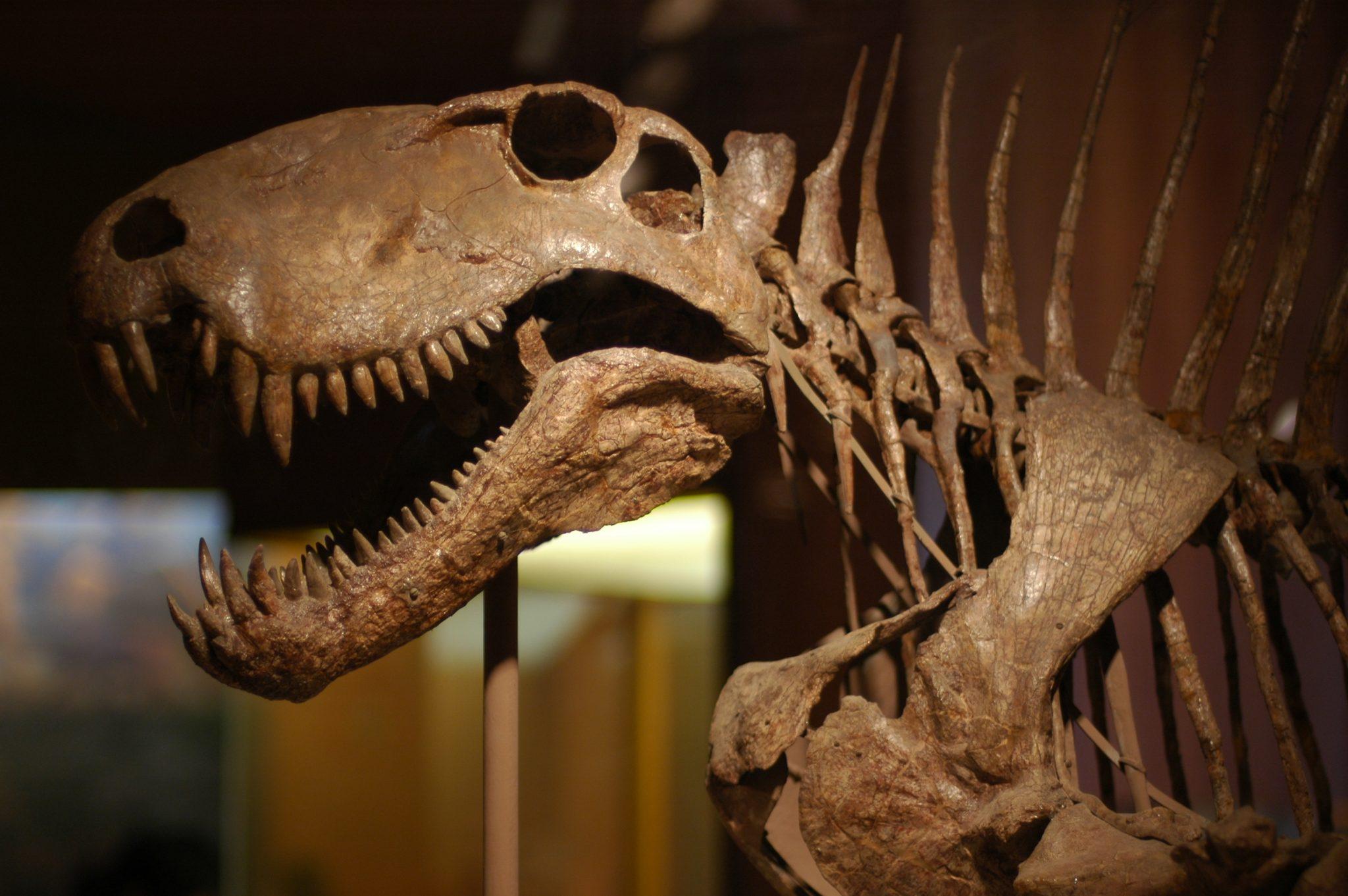 Los cráneos y la paleontología