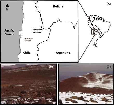 Levaduras extremófilas del Desierto de Atacama podrían ser especies modelo para la astrobiología