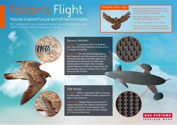 Fijándose en las alas del halcon peregrino para mejorar los aviones del futuro