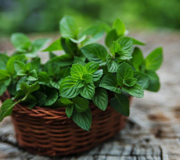 9 plantas para aliviar los problemas respiratorios