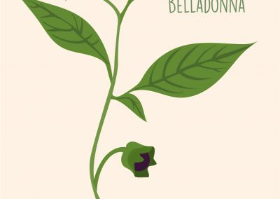 LOWRaquel Calvo Calvo- Atropa Belladonna (1)