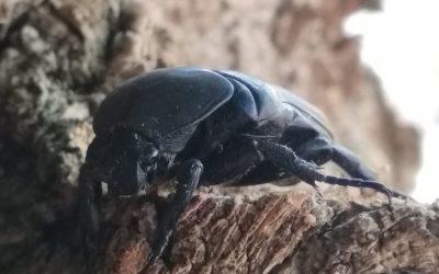 Los insectos y la supervivencia al frío