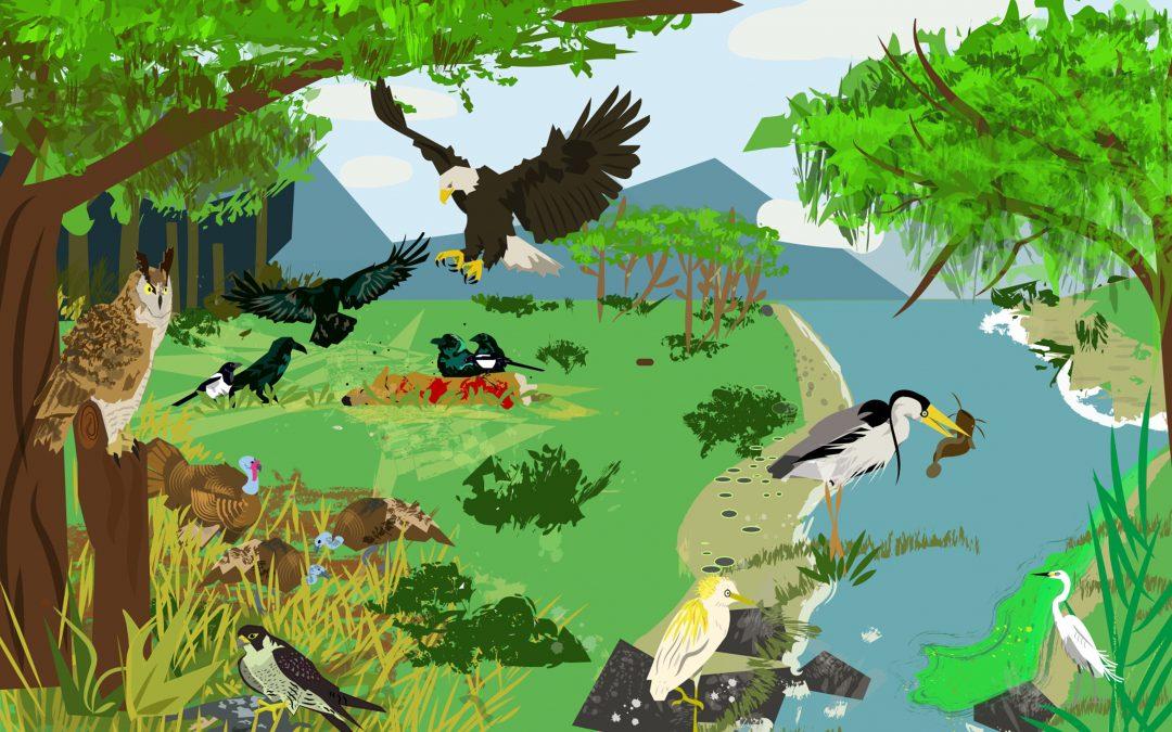 Bosques, láseres y diversidad de aves