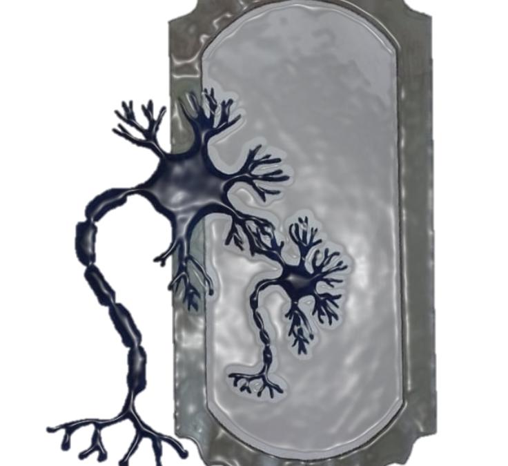 El cerebro social y las neuronas espejo