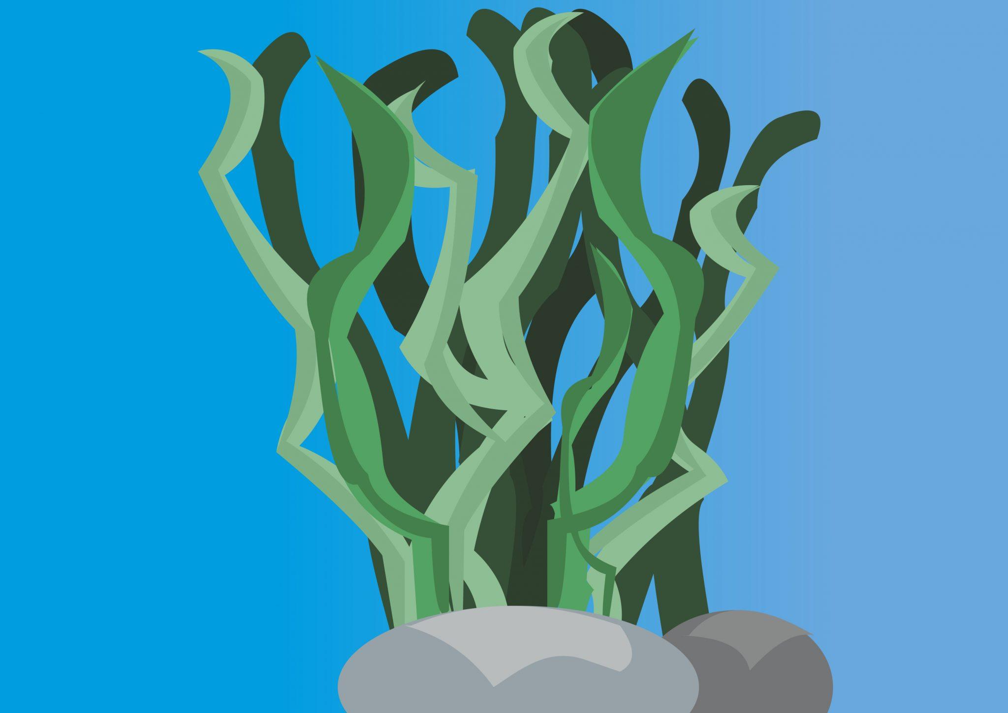 Ilustración de algas en el fondo del mar agarradas a unas rocas