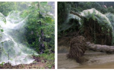 ¿ El comportamiento de las arañas sociales tiene la clave para producir métodos de optimización eficientes?
